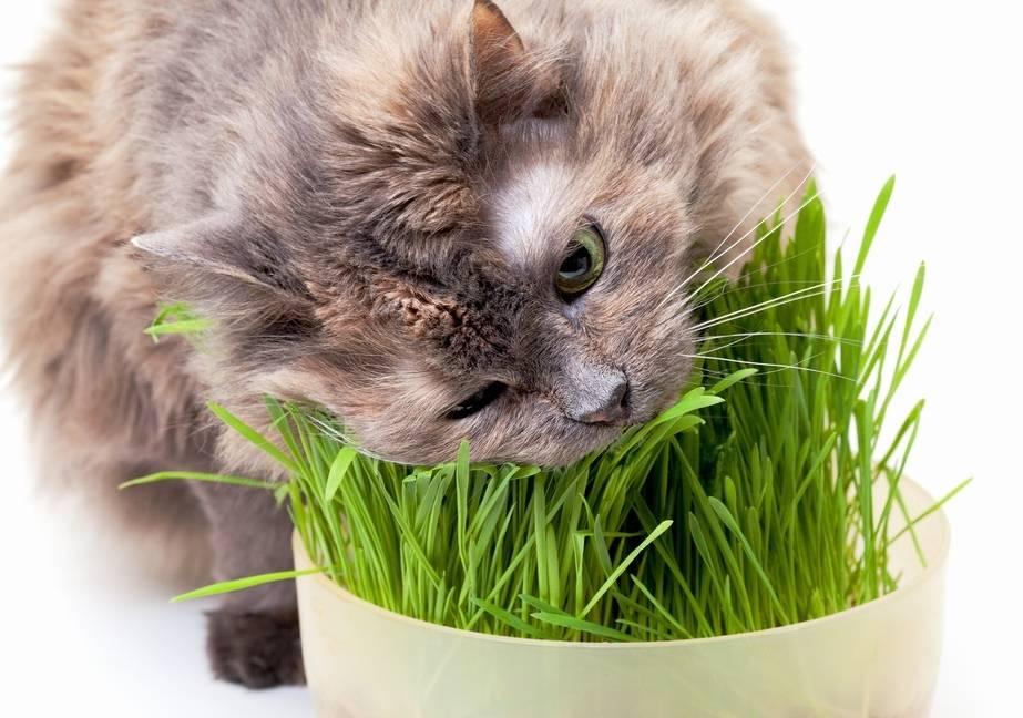 Какие витамины для шерсти кошек необходимы и какие препараты лучше всего?