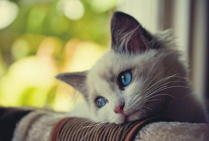 у котенка температура