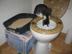 Как приучить кошку ходить на унитаз после лотка