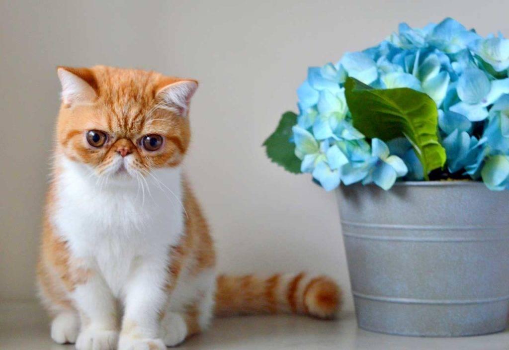 короткошерстная кошка с цветами