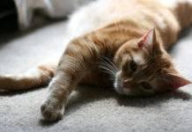 кошка лежит на ковре