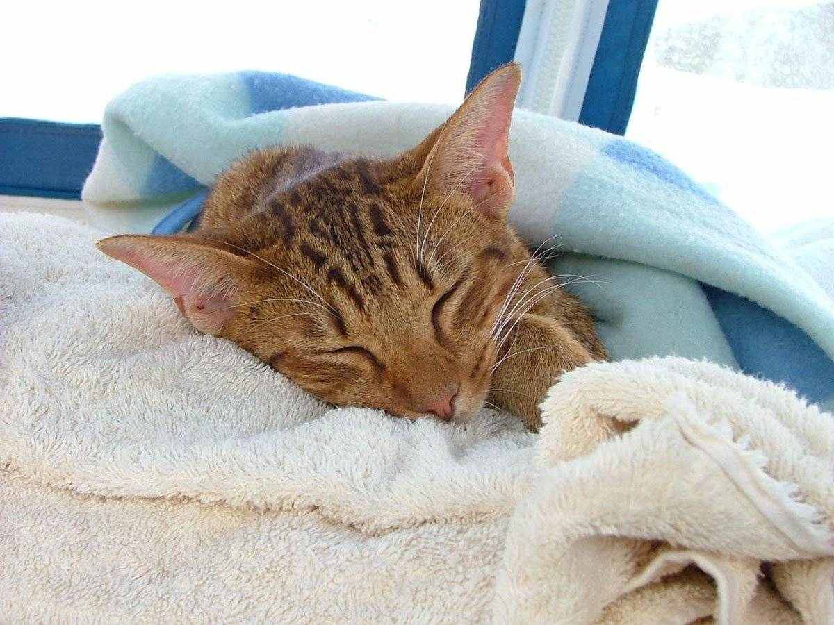 Мази шампуни и таблетки для кошек от лишая
