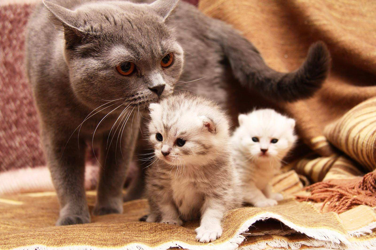Как помочь кошке при родах в домашних условиях?