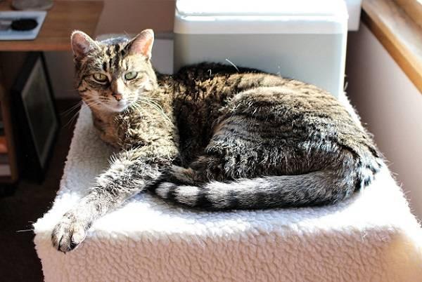 кот болеет и лежит на пледе