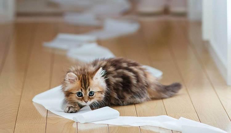 кот с бумагой