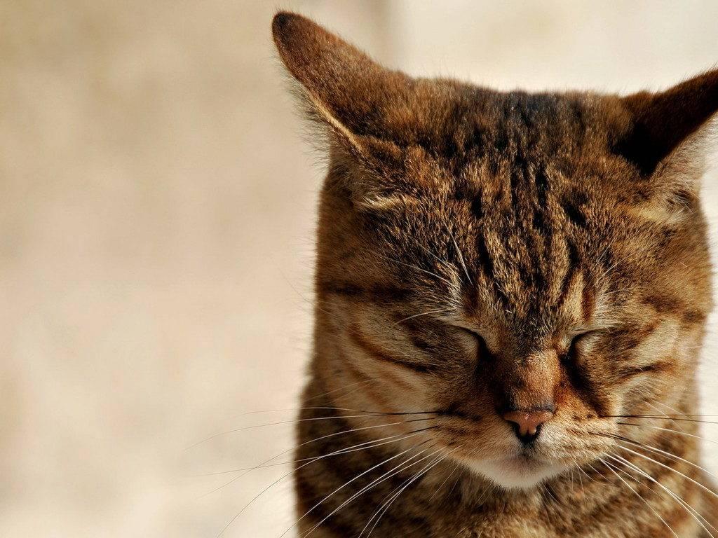 кот с закрытыми глазами