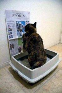 Запор у кошки после стерилизации причины чем помочь