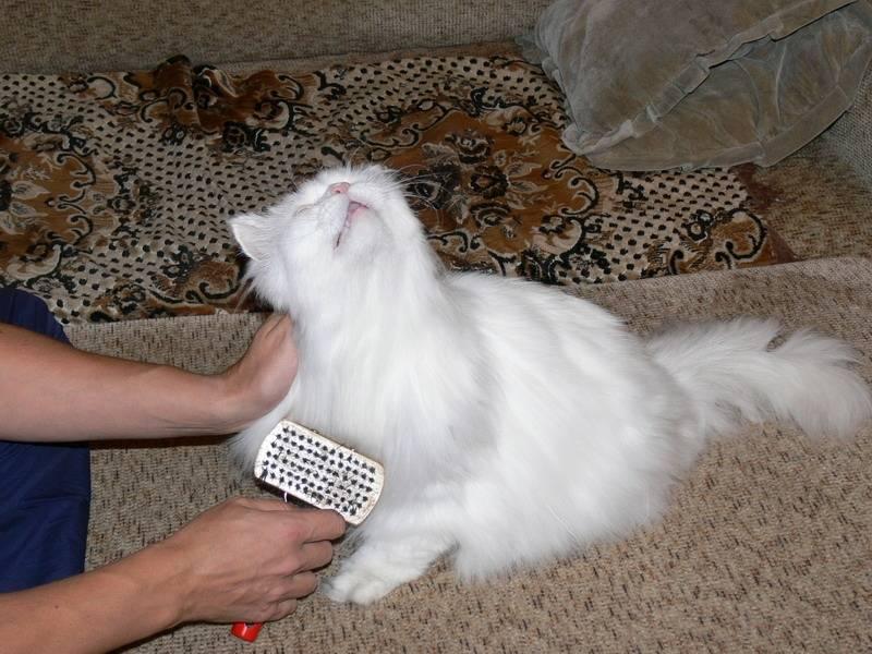 стрижка кошки триммером