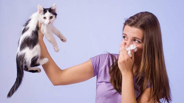 у девушки аллергия на кошку