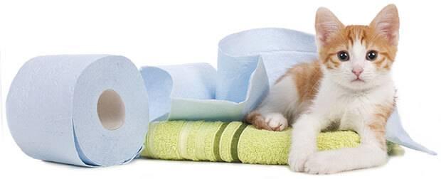 бумага и котенок