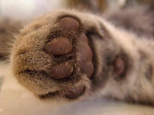 Удаление когтей у кошки - последствия и уход после операции