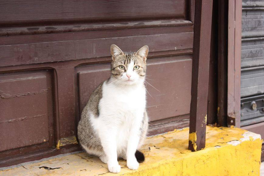 кошка у входа в дом