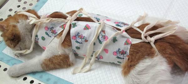 Попона для кошки после стерилизации: своими руками