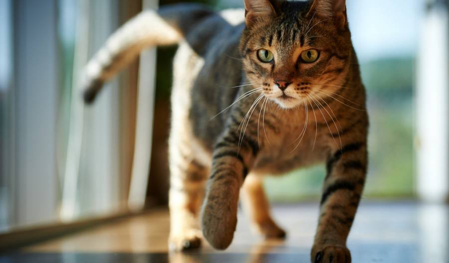 кот бежит в лоток