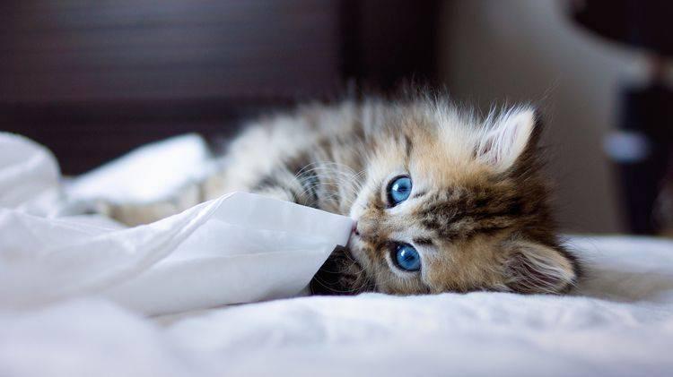 кот и бумага