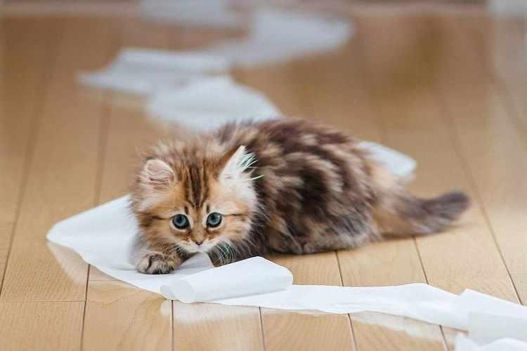котенок с бумагой