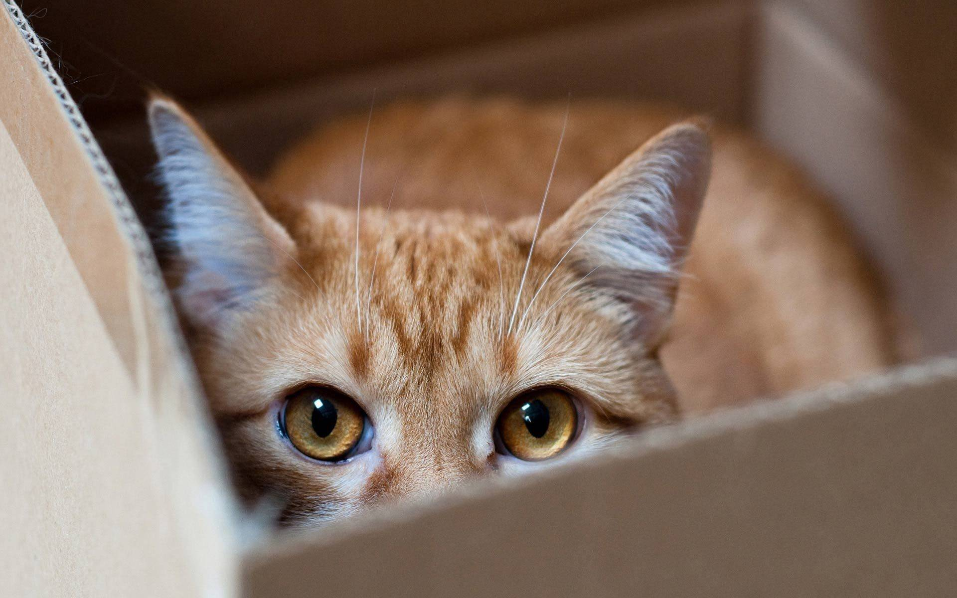 Метят ли кастрированные коты территорию а если кот уже метил до кастрации