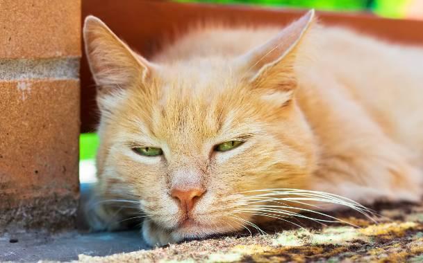 Популярные слабительные средства при запорах у кошек