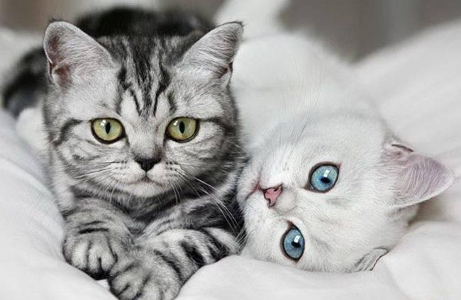 Половое созревание у кошек  как понять что питомец достиг зрелости