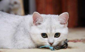 девочка кошка