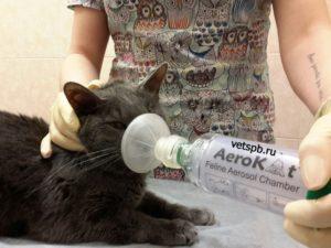 Подача кислорода коту