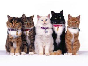 Коты разного окраса