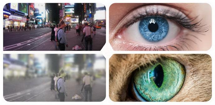 Изображение глазами человека и кошки
